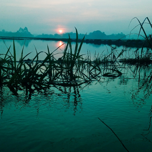 Phan Thanh Hoàng